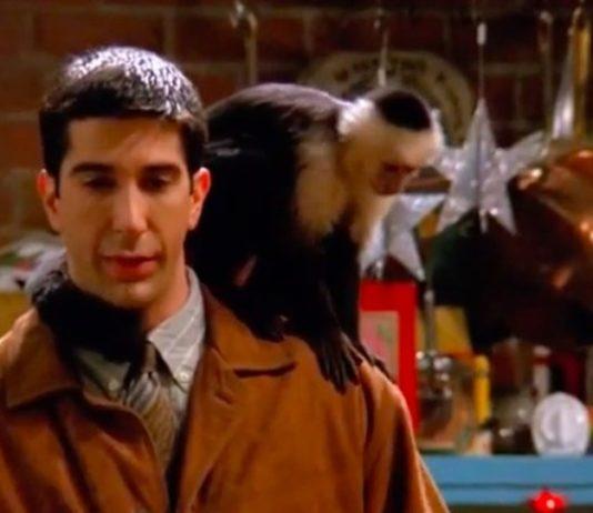 Katie, la scimmietta più famosa al mondo