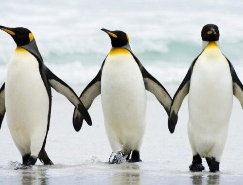 25 aprile, Giornata Mondiale del Pinguino