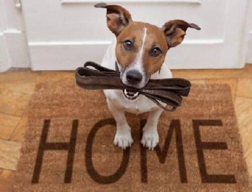 Come comportarsi con il cane in tempo di coprifuoco: ecco i consigli dell'Associazione Italiana Difesa Animali ed Ambiente-Italiambiente