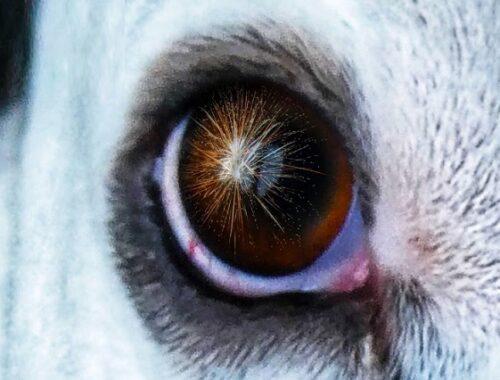 Botti di Capodanno, il Covid non li ferma: il decalogo OIPA per proteggere cani e gatti