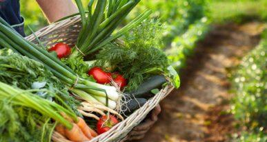 Agricoltura: il Senato approva la legge sul Biologico, Italia prima al mondo
